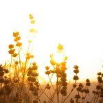 lampe solaire hibou : AVIS