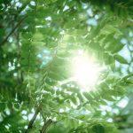 lampe solaire couleur : Test